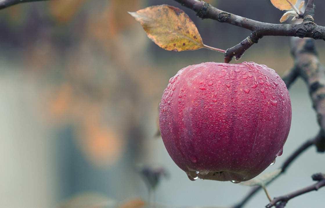 Celebrate Mabon with Apples